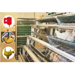 田瑞牧业 自动蛋鸡饲养设备-鸡饲养设备图片