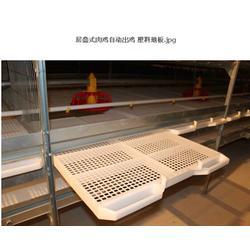 田瑞牧业(图),养鸡饲养设备,饲养设备图片
