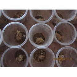 西九养殖,蝎子养殖中心,河南蝎子养殖图片