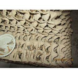 蝎子養殖廠,廣東蝎子養殖,西九養殖圖片