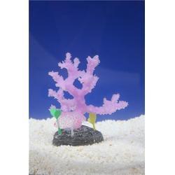 沃泰子非鱼(图) 子非鱼蓝珊瑚 子非鱼图片