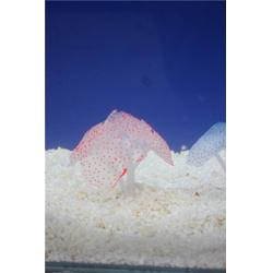 出售仿真吸盤珊瑚-子非魚-仿真吸盤珊瑚圖片