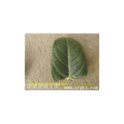 新品种苗木,供应绿化新品种苗木,荣成荣威种植园(优质商家)图片