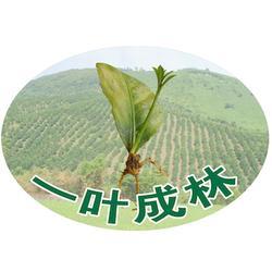 植物克隆-荣威植物克隆育苗技术-植物克隆繁殖方式图片