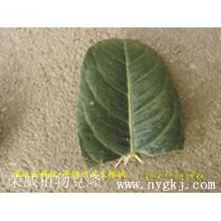新品种苗木-荣成荣威种植园(在线咨询)新品种苗木图片