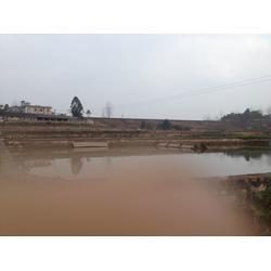 重庆甲鱼养殖场、璧山甲鱼、【华乙甲鱼】图片