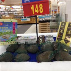 安顺团鱼、【华乙甲鱼】、贵州团鱼苗供应商图片