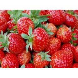歌润思农业,草莓采摘园,草莓采摘图片