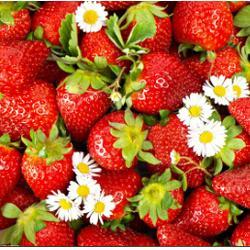 歌润思农业(图)、草莓采摘、草莓采摘图片
