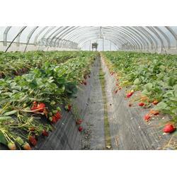 歌润思农业、观光生态农业模式、大渡口生态农业图片