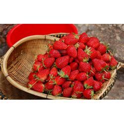 歌润思农业(图)、渝北生态果园、生态果园图片
