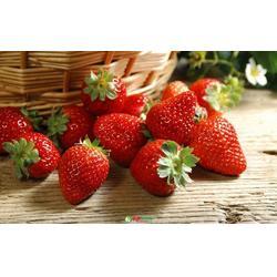 歌润思农业(图)_草莓采摘地_草莓采摘图片