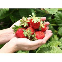 歌润思农业(图)|无污染生态果园|生态果园图片