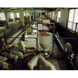 牧发机械,小猪液体自动下料器,下料器图片