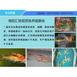 汇统观赏鱼量大从优(图)_武汉观赏鱼_观赏鱼图片