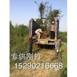 潢川1-2公分竹子图片