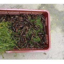 龙虾养殖亩成本-武汉裕农-湖南龙虾养殖亩成本图片
