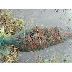 湖南小龙虾苗种出售、湖南小龙虾苗种、武汉裕农图片