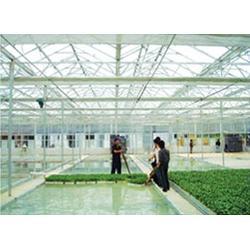 连栋温室、鑫和温室园艺(优质商家)、花卉市场连栋温室图片