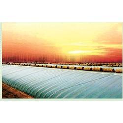 日光温室承建-日光温室-青州鑫和温室园艺厂(查看)图片