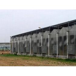 连栋温室工程|河南连栋温室|青州鑫和温室园艺图片
