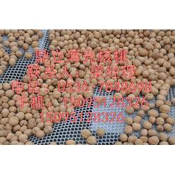 鼎立薄壳核桃(图)、核桃粉加工、临沂核桃粉图片