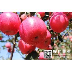 苹果新品种,苹果苗,大樱桃品种图片