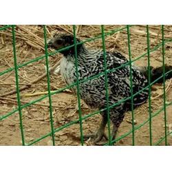丰镇铁丝网,绿色围栏网,养殖绿色铁丝网图片