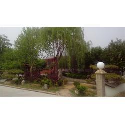泰安避暑山庄,金凤岭,避暑山庄全景图片