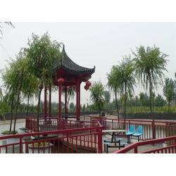 枣庄生态旅游、金凤岭、原生态旅游区图片