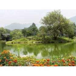 新泰垂钓园、山水垂钓园、金凤岭(多图)图片