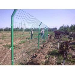 绿塑料皮铁丝防护网,陇南铁丝防护网,防护网生产厂家(多图)图片