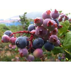 浩铭农业蓝莓采摘节开幕 、汝阳周末郊游、周末郊游图片
