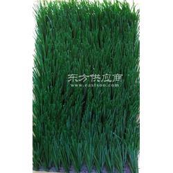 卡姆昂草坪运动操场仿真草坪 足球场专用人造草坪 仿真草皮地毯图片