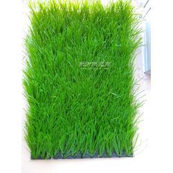 足球场人造草坪 人工草皮厂家图片