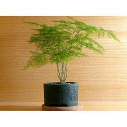 盆栽租摆公司|华盛园林绿化(已认证)|盆栽租摆图片