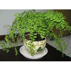 华盛园林室内植物(图)|室内植物好处|南山室内植物图片