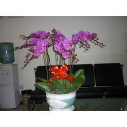 花篮鲜花、华盛园林绿化(在线咨询)、花篮鲜花图片