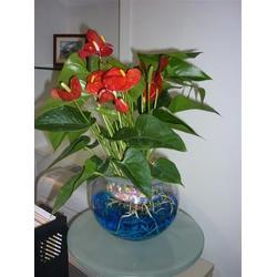 室内植物品种_华盛园林绿化(在线咨询)_室内植物图片