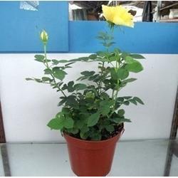 华盛园林室内植物(图) 室内植物绿化 福田室内植物图片