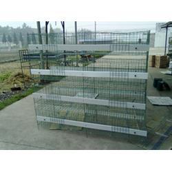 肉鸡笼尺寸、煜鑫畜牧(在线咨询)、鸡笼图片