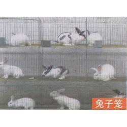 五莲鸡笼,五莲鸡笼厂_鸡笼_煜鑫畜牧(查看)图片