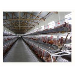 煜鑫畜牧机械(图)|养鸡设备价|养鸡设备图片