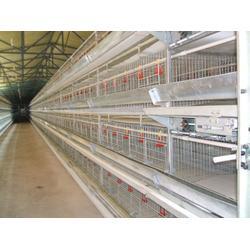 蛋鸡笼,肉鸡笼-煜鑫畜牧(在线咨询)鸡笼图片