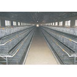 蛋鸡鸡笼供应商,蛋鸡鸡笼,煜鑫畜牧(查看)图片