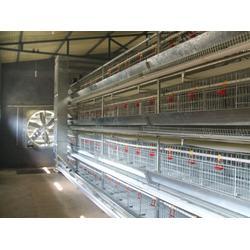 养鸡笼具供应商|煜鑫畜牧|养鸡笼具图片