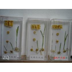 真实植物标本,求精教学(在线咨询),安徽植物标本图片