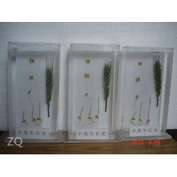 植物标本、求精教学、植物标本图片