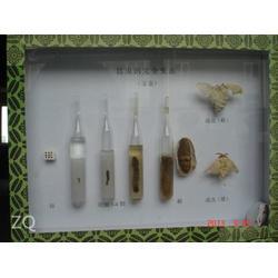 生物昆虫标本、求精教学(在线咨询)、吕梁市昆虫标本图片