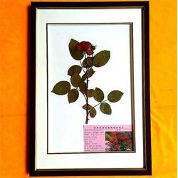植物病理标本,求精教学,标本图片